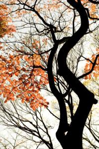 小石川庭園01