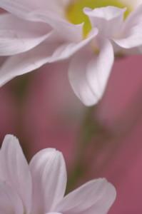 花素材セレクト